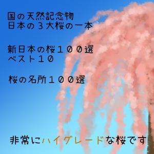 三春滝桜とは